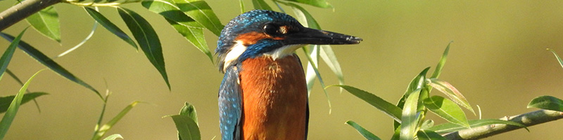 PNC-parallax-percasurs-albastru